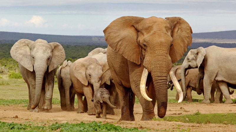 Elephant Special reserve tour