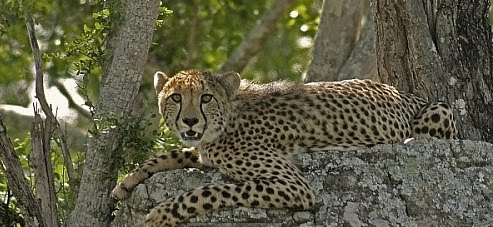 kruger park day tour maputo tours