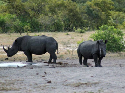 Kruger park tailor made tour