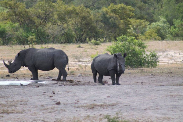 Kruger park tailor made tour