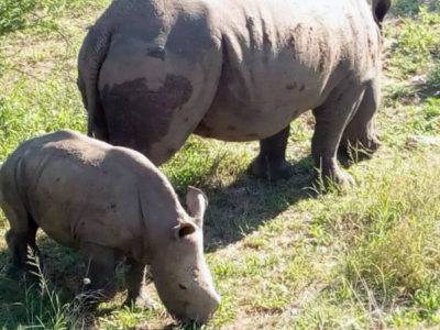 Kruger Park From Maputo private tour