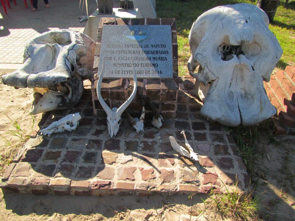 mozambique animal skulls at maputo special reserve