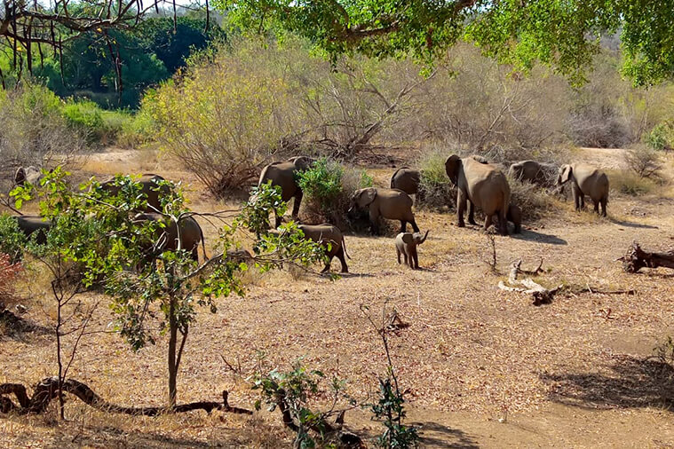 Glamping in kruger national park and marloth park
