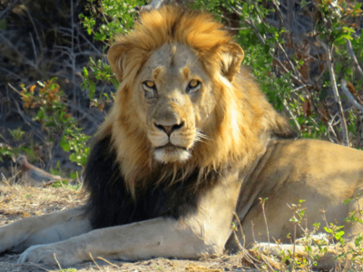 Marloth and Kruger National Park Glamping Tour