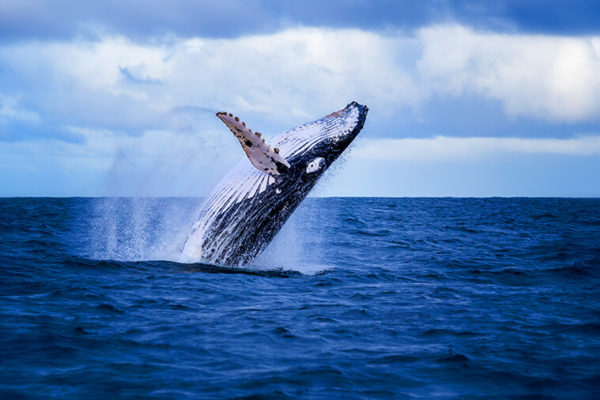 mozambique whale watching