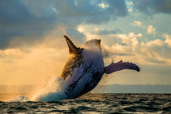 mozambique whale watching tour